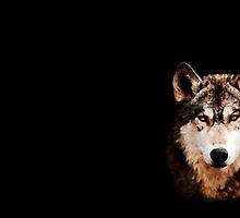 Green Eyed Wolf by TinaGraphics
