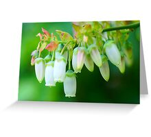 Blueberry flowers Greeting Card