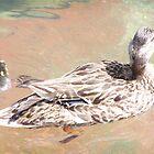 Duck by wayatsagi