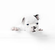 Frenchie by Andrew Bret Wallis