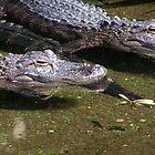 Alegator by wayatsagi