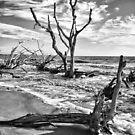 Jekyll Island, Georgia by g richard anderson