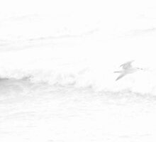 seagull no1 by dkspecial