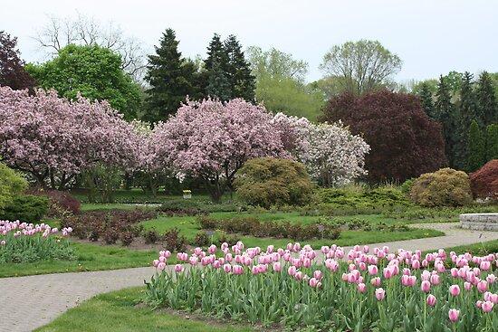 Niagara  Falls Canada  Garden  in Springtime Pink by eoconnor