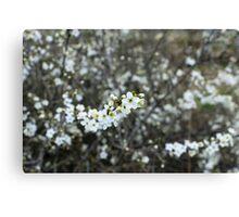 Macro Spring Flower Canvas Print