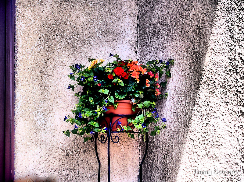 The Corner Flower Pot by Jimmy Ostgard