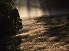 "'Morning Grass"" by debsphotos"