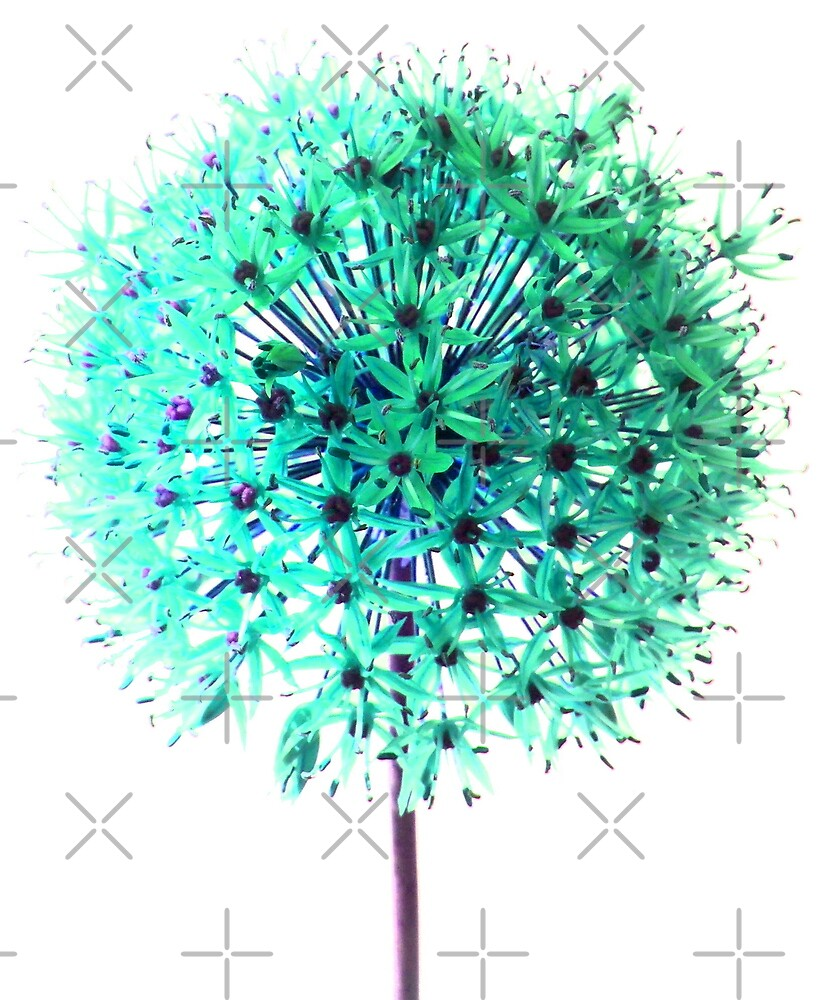 Allium edit by SweetLemon