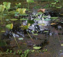 Wetlands of Darwin Sticker