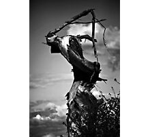 The Grim Reaper Tree Photographic Print