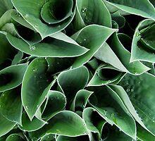 """""""Untitled Flora l"""" Santa Marta, Columbia by Brad Starks"""