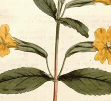 The Botanical magazine, or, Flower garden displayed by William Curtis V9 V10 1795 1796 0144 Mimulus Aurantiacus Orange Monkey Flower Sticker