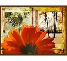 Scrapbook of a Flower Photographic Print