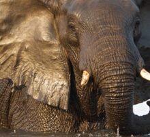 Elephant ... Bronze Beauty Sticker