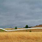 Spring Grasses ~ Fort Randell, South Dakota by Diane Trummer Sullivan