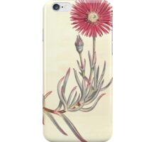 The Botanical magazine, or, Flower garden displayed by William Curtis V11 V12 1797 1798 0077 Mesembryanthemum Spectabile Shewy Fig Marigold iPhone Case/Skin