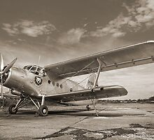 Baltic Bear (Front View) by Fletch147