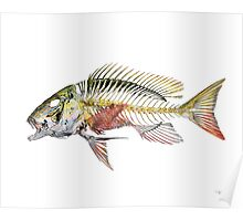 Mutton Snapper Poster