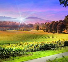 Biltmore Sunflower Field by Darlene Lankford Honeycutt
