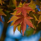 AUTUMN LEAVES by hugo