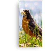 bird species Canvas Print