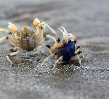 In A Crabby Mood by JCMPhotos