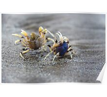 In A Crabby Mood Poster