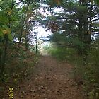 Fall Walk in Beautiful Trail by Joseph Green