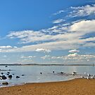 Seagulls on a summer afternoon. by johnrf