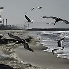 BIRDS ON THE BEACH by Paul Quixote Alleyne