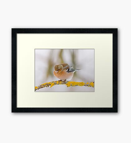 Just in time for Christmas Framed Print