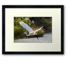 Fly-By Framed Print