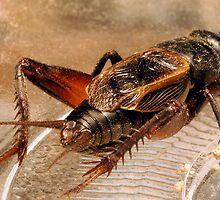 Crickets Backside by Michael  Gunterman