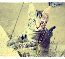 Chibi-chan - Tabby Cat by Persephoni