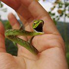 Green Vine Snake by Amrita Neelakantan