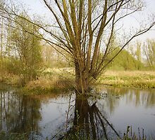 A willow, reflected in the water by Smaragd