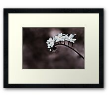 curly sue Framed Print