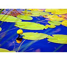 Even water celebrates with flowers Photographic Print