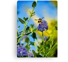 Worker Bee, Staffordshire, Midlands, UK. Canvas Print
