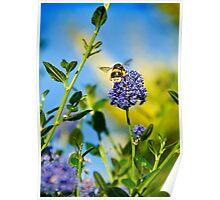 Worker Bee, Staffordshire, Midlands, UK. Poster