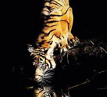Tiger by Annette Blattman