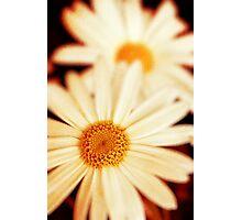 .:Daisies:. Photographic Print