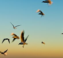 Seagulls flying. by Andrew Lever