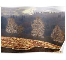 Three Trees on Loughrigg Fell  Poster