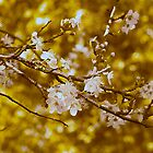 Blossoming Gold by Cathy  Walker