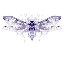 Overlaid Insect Print by zealdesign