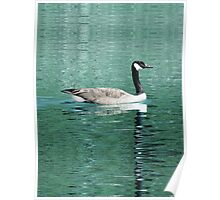 Canada Goose On Shimmering, Shimmering Water Poster