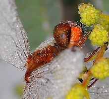 Dragonfly Up Close by Moorey