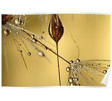 Dandelion Seeds Poster