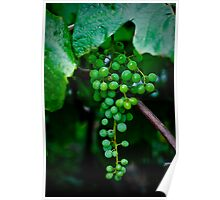 Grapes Poster